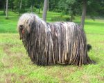 Either a dog, or a saw horse covered with mop heads