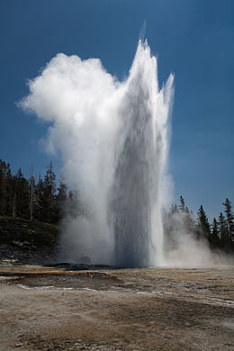 Old Faithful, a geyser in Yellowstone National Park