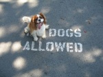 dogs-are-dawgs-28