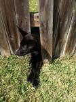 life-tough-dog-37