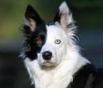 life-tough-dog-581