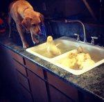life-tough-get-dog-14