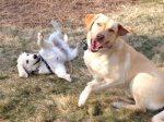 life-tough-get-dog-393