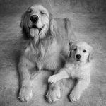 life-tough-get-dog-511