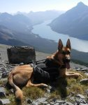 life-tough-get-dog-513