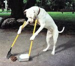Tidy Dog