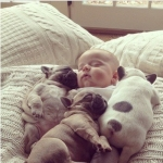 Puppies snuggling the baby