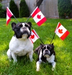 We're Canadian Dogs, eh...