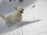 life-tough-dog-511