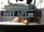 life-tough-get-dog-35