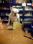 life-tough-get-dog-391