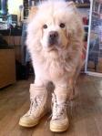 lifes-tough-dog-37