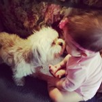 Shi-tzu are the perfect pet for a kid