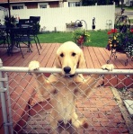 Doggy Prison