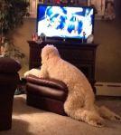 dog-cat-furniture-13