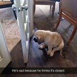 funny-awesome-animals-24