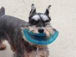 Frisbee Mouth