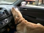 life-tough-get-dog-421