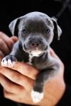 life-tough-get-dog-581 (2)