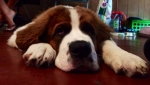 lifes-tough-dog-22