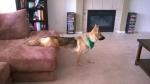 lifes-tough-dog-29