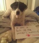 pet-confessions-13