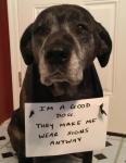 pet-confessions-17