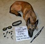 pet-confessions-6