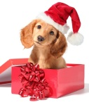 christmas-dog-dogs-33144122-650-765