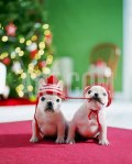 christmasdogs