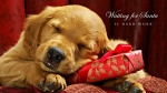cute-merry-christmas-wallpaper-dogs-djfdpwsu