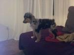 dem-doggone-dogs-01 (1)