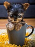 Cup of Dog