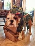 life-tough-get-dog-16 (1)