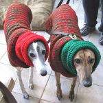 these-dogs-arent-very-happy-about-their-christmas-sweaters-18-photos-2