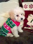 these-dogs-arent-very-happy-about-their-christmas-sweaters-18-photos-3
