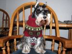 these-dogs-arent-very-happy-about-their-christmas-sweaters-18-photos-5