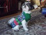 these-dogs-arent-very-happy-about-their-christmas-sweaters-18-photos-9