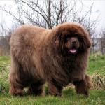 Bear or Dog?
