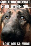 funny-awesome-animals-17