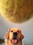 life-tough-get-dog-13