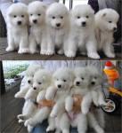 Puppy Rows