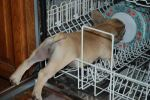 Helping wash dishes
