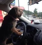Honking in traffic