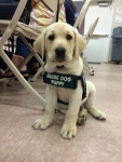 service-dogs-0