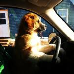 Dog Chauffeur