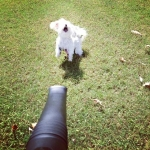 life-ruff-get-dog-15