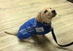 service-dogs-4