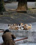 funny-animals-photos-14