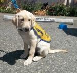 service-dogs-12